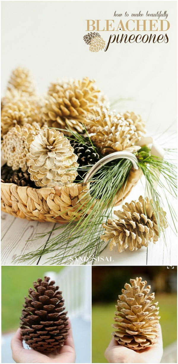Bleached Pinecones for Decor. Tired of the natural look of pinecones in your decor? Try to bleach your pinecones for an unusual beautiful effect in home decor.